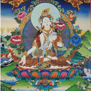 Witte Tara